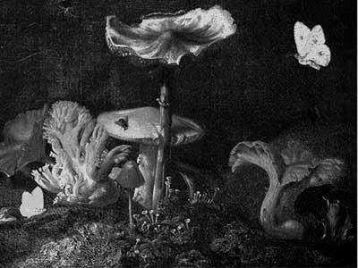 Doris Knecht: Wald, Buchcover Ausschnitt